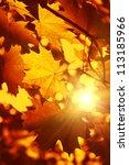 Branch Of Bright Autumn Maple...