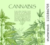 cannabis hand draw poster. drug ...   Shutterstock .eps vector #1131866705