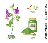 alfalfa set with powder and... | Shutterstock .eps vector #1131894152