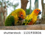 two bright colorful parrots on... | Shutterstock . vector #1131930836