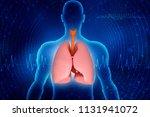 healthy human lungs 3d...   Shutterstock . vector #1131941072