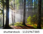 sunbeams at lower lewis river... | Shutterstock . vector #1131967385