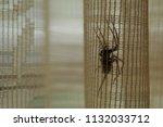 dangerous poisonous scary big... | Shutterstock . vector #1132033712
