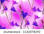 flowers campanula patula | Shutterstock . vector #1132078292