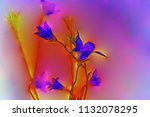 flowers campanula patula | Shutterstock . vector #1132078295