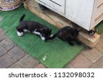 Nice Cats On The Streets Of...