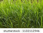 close up of a thicket of marsh...   Shutterstock . vector #1132112546