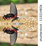 black and red butterfly  the... | Shutterstock . vector #113214826