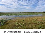 waterlilies floating on the... | Shutterstock . vector #1132220825