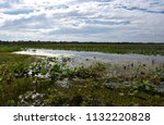 waterlilies floating on the... | Shutterstock . vector #1132220828