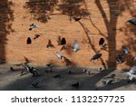 """some pigeons  at """"tha phae""""...   Shutterstock . vector #1132257725"""
