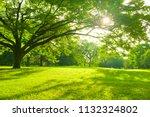 Morning Park   Shade Of Tree