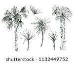 set of isolated coconut or... | Shutterstock .eps vector #1132449752