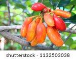 uvaria rufa blume fruit ... | Shutterstock . vector #1132503038