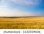 green field and beautiful sunset | Shutterstock . vector #1132529636