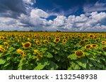vibrant sunflower field wide... | Shutterstock . vector #1132548938