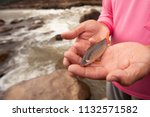 botia or loach in fisherman...   Shutterstock . vector #1132571582