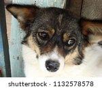 sad dog look                    ... | Shutterstock . vector #1132578578