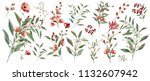 watercolor illustration.... | Shutterstock . vector #1132607942