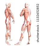 conceptual anatomy healthy... | Shutterstock . vector #1132652852