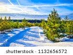 winter snow fir trees forest...   Shutterstock . vector #1132656572