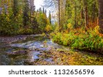 forest river landscape. autumn... | Shutterstock . vector #1132656596