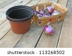 Basket with the bulbs of hyacinths and flowerpots on a  table - stock photo
