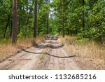 road to the coniferous forest | Shutterstock . vector #1132685216