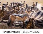 zebras migration   ... | Shutterstock . vector #1132742822