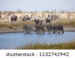 zebras migration   ... | Shutterstock . vector #1132742942