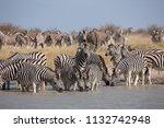 zebras migration   ... | Shutterstock . vector #1132742948