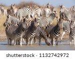 zebras migration   ... | Shutterstock . vector #1132742972