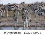 zebras migration   ... | Shutterstock . vector #1132742978