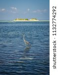 a heron hunting in the sea.... | Shutterstock . vector #1132774292