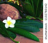 Stock photo coconut green leaves and white plumeria flowers with green background spa business concepts 1132783142