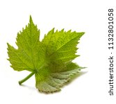 one young green big grape leaf... | Shutterstock . vector #1132801058