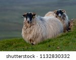 white sheep grazing on the... | Shutterstock . vector #1132830332