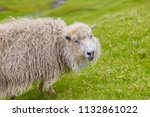 portrait of funny sheep ... | Shutterstock . vector #1132861022