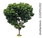 isolate large neem tree leaves... | Shutterstock . vector #1132951352