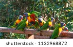 lorikeet. a small and beautiful ... | Shutterstock . vector #1132968872
