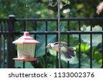 blue jay bird songbird flying... | Shutterstock . vector #1133002376
