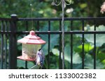 blue jay bird songbird flying... | Shutterstock . vector #1133002382