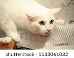 frightened white cat | Shutterstock . vector #1133061032