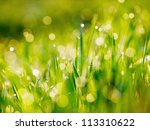 greed grass in a dew. close up... | Shutterstock . vector #113310622