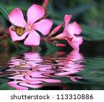 Butterfly On A Flower 02