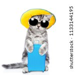 Cute Kitten In Summer Hat And...