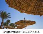 beautiful green palm trees... | Shutterstock . vector #1133144516
