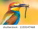 exotic bird holds an exotic... | Shutterstock . vector #1133147468