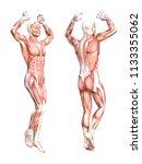 conceptual anatomy healthy... | Shutterstock . vector #1133355062