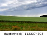 field with wheat and poppy seed ... | Shutterstock . vector #1133374805